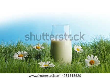 Glass of milk in spring fresh grass with white daisies  - stock photo