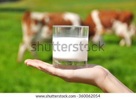 Glass of milk in the hand against herd of cows - stock photo