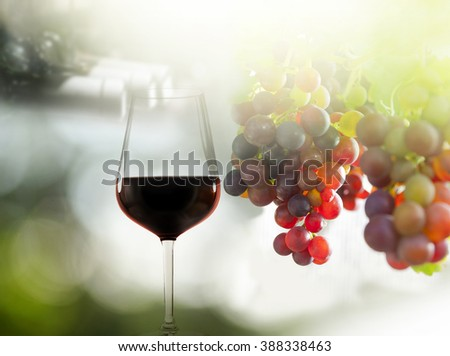 Glass of red wine and grapes in various colors, wine bottles in rack in background