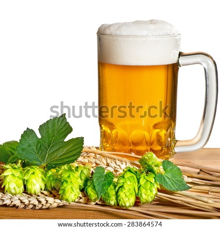 glass of unfiltered beer with hop cones on the white - stock photo