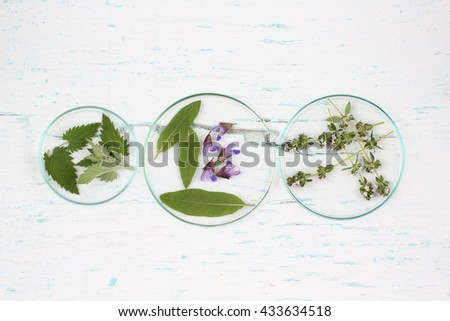 Glass plates with herbs holy basil flower, thyme, mint,  salvia flower, camomile, Melissa, Jasmínum set up on old wooden background .