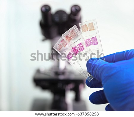 Histology Stock Images, Royalty-Free Images & Vectors | Shutterstock