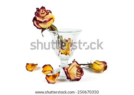 Glass vase with dry roses and petals fallen dry on a white background - stock photo