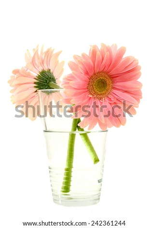 Glass vase with two pink daisy flowers  - stock photo