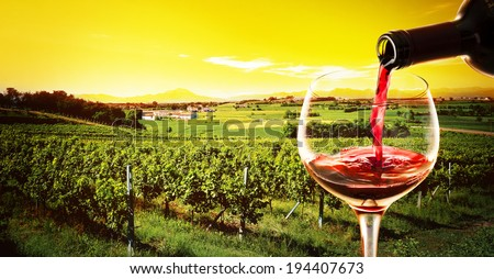 glass with red wine  and bottle in the vineyard