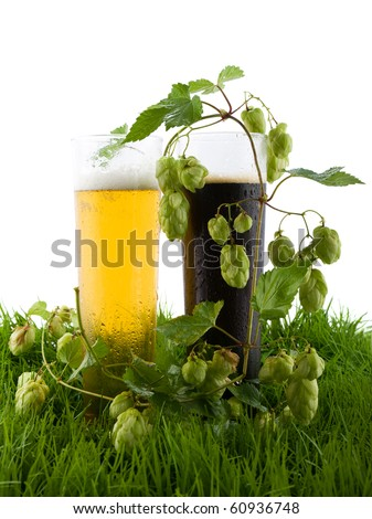 Glasses of light and dark beer in the grass and the fruits of hops. - stock photo