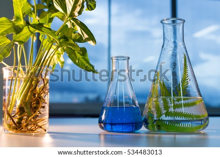 glassware, bottle, flasks for experiment in lab.