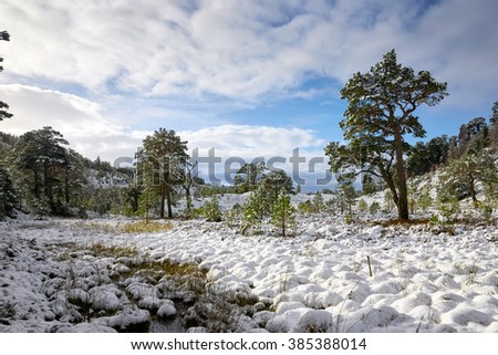 Glenmore Forest Park, Cairngorms in the Scottish Highlands, UK. - stock photo