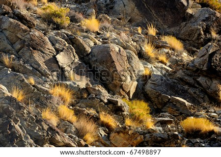 Glimmering desert plants against rocky wall along the Emigrant Canyon Road in Death Valley National Park, California - stock photo