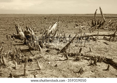 Global pollution - barren landscape with died plants