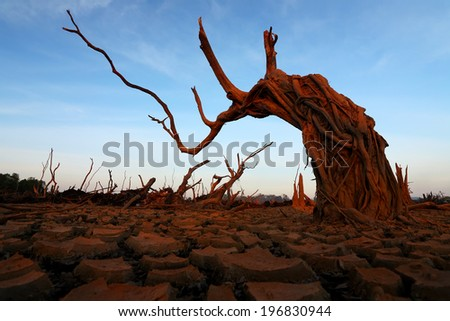 Global warming concept dead tree under dramatic evening sky  - stock photo