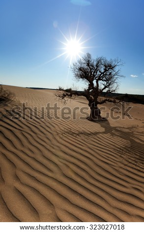 Global warming concept. Lonely dead tree under dramatic sun - stock photo