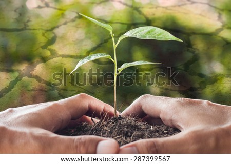 global warming theme,hands holding and caring a young plant with cracked ground background