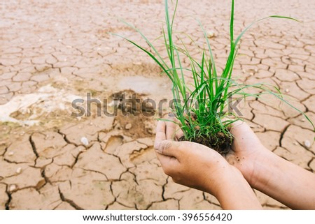 global warming theme human hands defending green grass sprout ri - stock photo