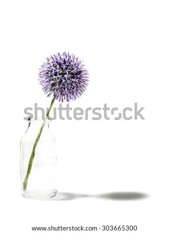 Globe thistle in milk bottle throwing shadow on white background