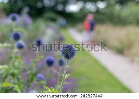 globe thistles in the garden with people in the background - stock photo