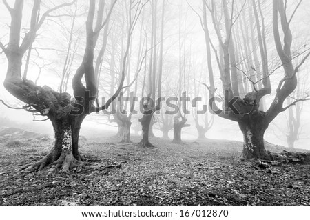 gloomy forest with scary trees in black and white - stock photo