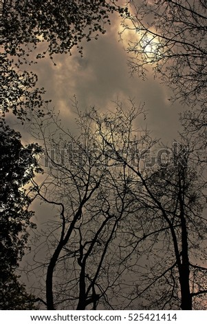 gloomy, sullen clouds shine through the trees