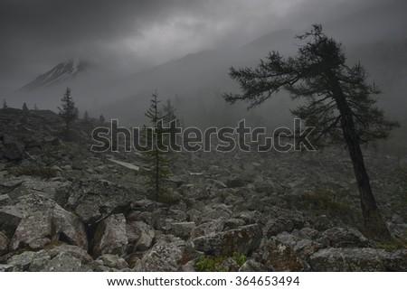Gloomy valley, Altai mountains, Russia - stock photo