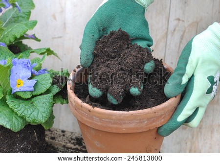 gloved hand holding loam over a flower pot - stock photo