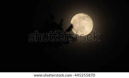Glowing moon in focus seen through tree leaves not in focus