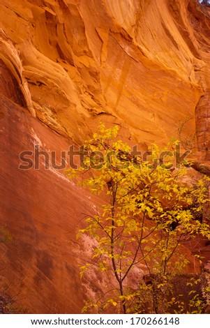 Glowing Navajo Sandstone, Zion National Park, Utah - stock photo