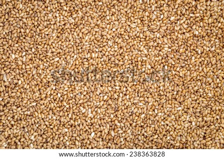 gluten free teff grain background - important food grain in Ethiopia and Eritrea - stock photo