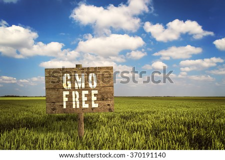 GMO FREE sign on field of rye. Selective focus. - stock photo