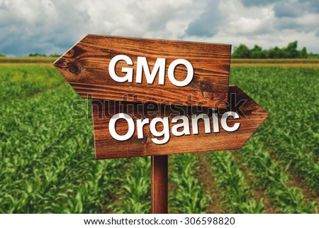 Gmo or Organic Farming Wooden Direction Sign in Agricultural Field - stock photo