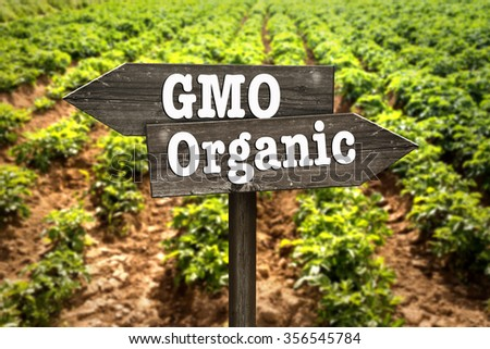 GMO or organic, wooden sign. Selecting the direction of agriculture. - stock photo