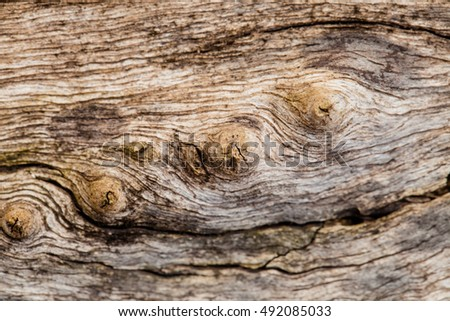 Gnarled Stock Photos Royalty Free Images Amp Vectors