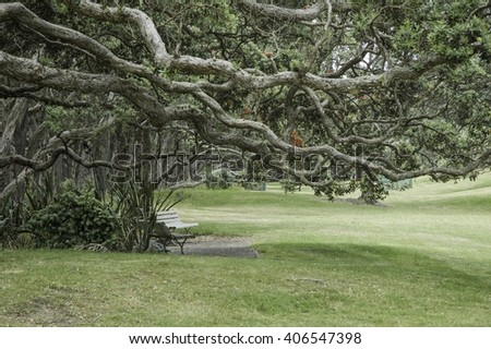 Gnarled and twisted branches of trees over park benches giving an eerie atmosphere - stock photo