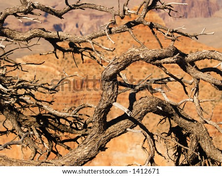 Gnarled old tree branches framing a view into the Grand Canyon
