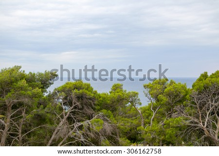 Gnarled Trees and Blue Sea with Overcast Sky