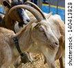 goat head - stock photo
