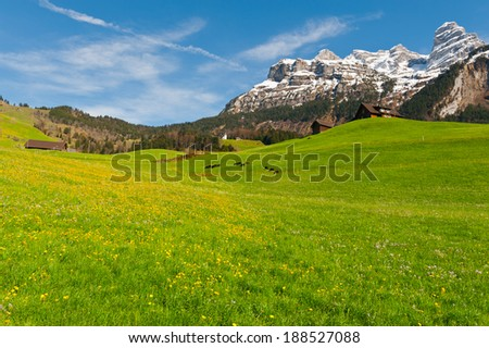Goats Grazing on Green Pasture in Switzerland - stock photo