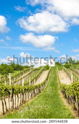 God's torture near Hnanice with spring vineyard, Southern Moravia, Czech Republic - stock photo