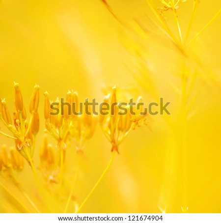 gold abstract natural background of grass and red flowers in full bloom taking all the space image - stock photo