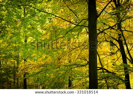 Gold and green leaves in the autumn forest