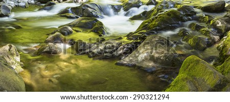 Gold and green sunlit trees reflected in the Sol Duc River in Olympic National Park, Washington. - stock photo