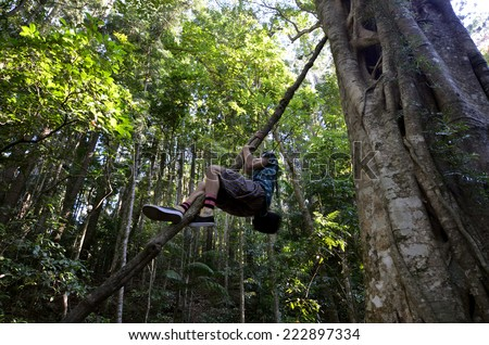 GOLD COAST - OCT 06 2014:Man climb on Springbrook Leatherwood tree in Springbrook National Park in Queensland Australia.It is a rare rainforest 30m tall tree, discovered only in 1994 by David Jinks.