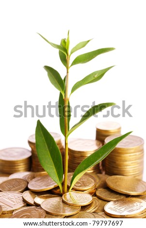 gold coins and plant isolated on white