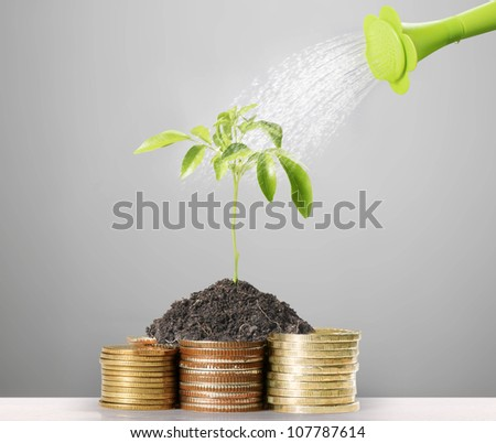 gold coins and plant them isolated on white - stock photo