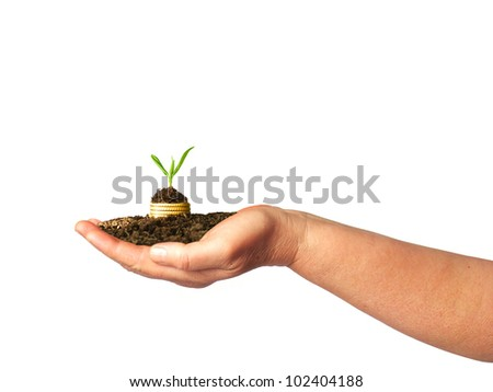 Gold coins in soil with young plant on arm. Financial metaphor. - stock photo