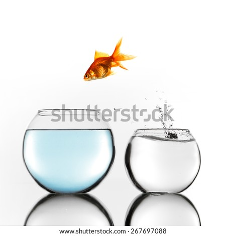 Gold fish jumping from smaller to bigger bowl - stock photo