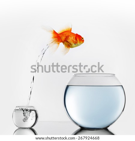 Gold fish jumping out of small to big fishbowl - stock photo