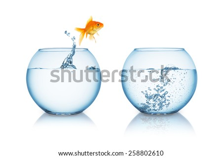 gold fish jumps in to a fishbowl with hot water - stock photo