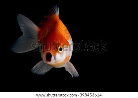 gold fish on black background - stock photo