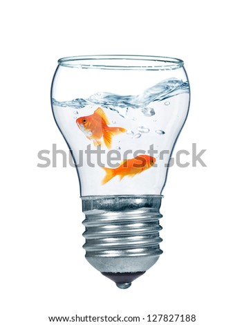 Gold fishes in water inside an electric light bulb - stock photo