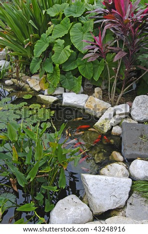 Gold Japanese Koi in a colorful botanical garden setting.  Lily pads and beautiful red and green plants above the rocks surrounding beautiful pond. - stock photo